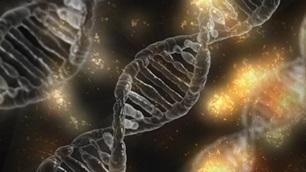 การถ่ายทอดลักษณะทางพันธุกรรม