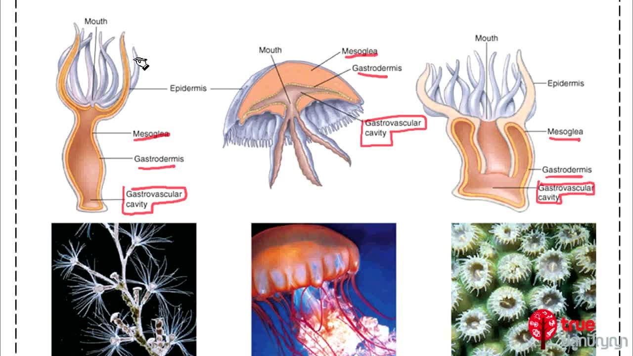 ชีววิทยา ม.4-6 เรื่อง การรักษาดุลยภาพในร่างกาย ตอนที่ 1