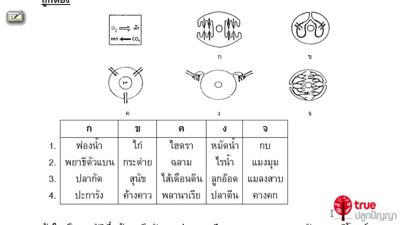 ชีววิทยา ม.4-6 เรื่อง การรักษาดุลยภาพในร่างกาย ตอนที่ 2