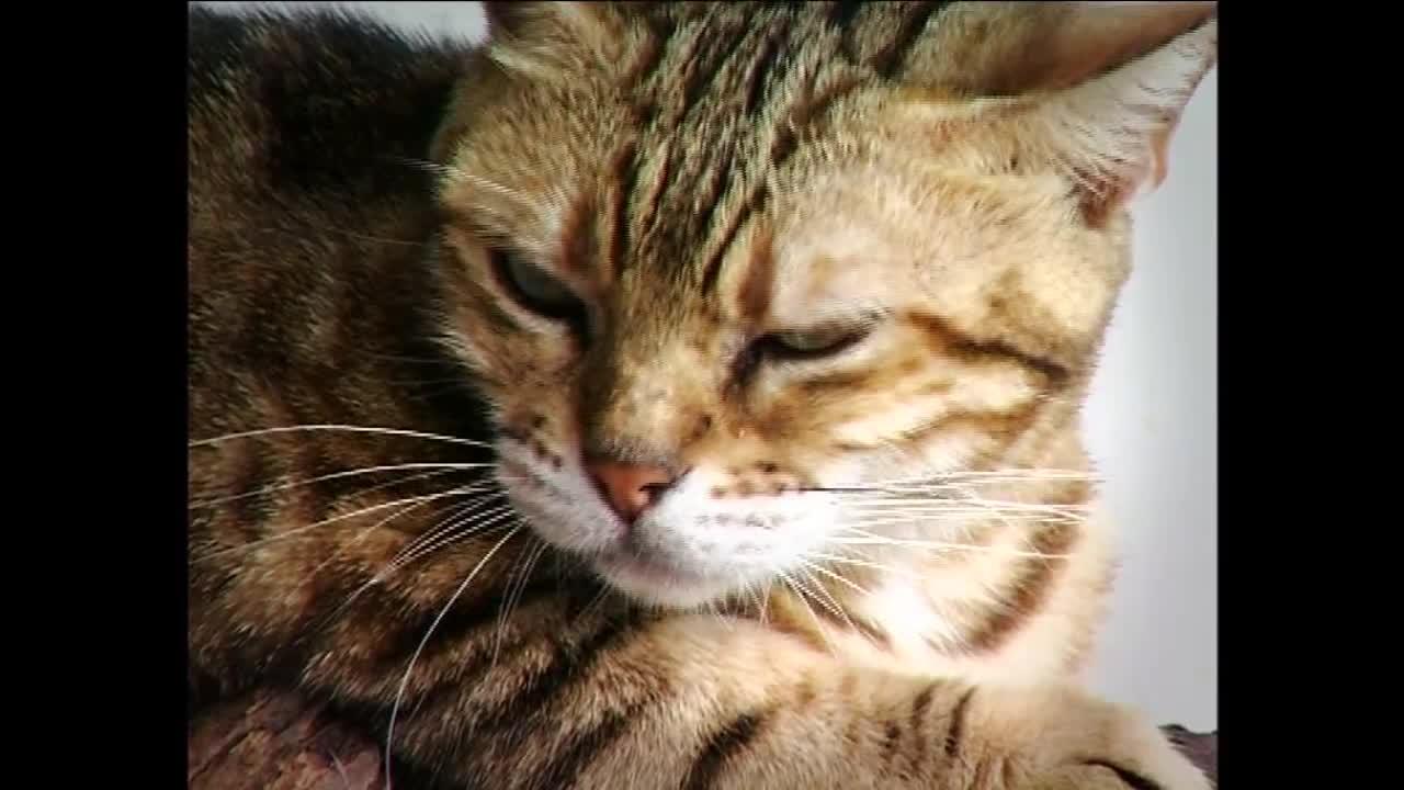 วันละนิดวิทย์เทคโน ตอน แมวกลัวน้ำจริงหรือ