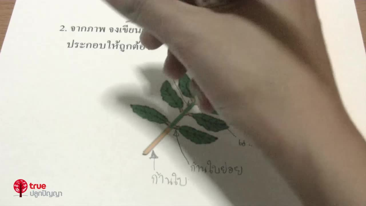 พืชและสัตว์ ตอน 3