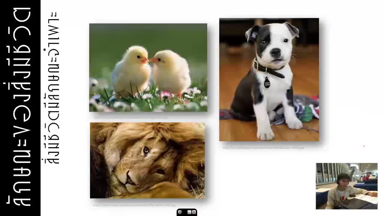 ลักษณะของสิ่งมีชีวิต - การตอบสนองต่อสิ่งเร้า