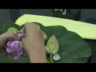 วิธีพับดอกบัว