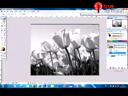 การเน้นจุดเด่นให้กับภาพด้วยโปรแกรม Photoshop