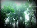 วันละนิดวิทย์เทคโน ตอน ทำไมต้นไม้ถึงอายุยืน