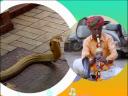 วันละนิดวิทย์เทคโน ตอน งูเต้นตามจังหวะเพลงได้จริงหรือ