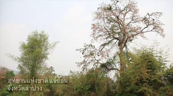 สารคดีเอกลักษณ์ไทย ชุด พฤกษาพรรณสัญลักษณ์ถิ่นไทย ตอนที่ 14