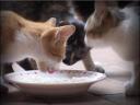 วันละนิดวิทย์เทคโน ตอน ทำไมแมวถึงมีเก้าชีวิต