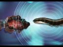 วันละนิดวิทย์เทคโน ตอน ปลาบางชนิดปล่อยกระแสไฟฟ้าได้อย่างไร