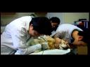 วันละนิดวิทย์เทคโน ตอน สุนัขมีกรุ๊ปเลือดหรือเปล่า