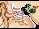 วันละนิดวิทย์เทคโน ตอน หูบอกทิศทางได้อย่างไร