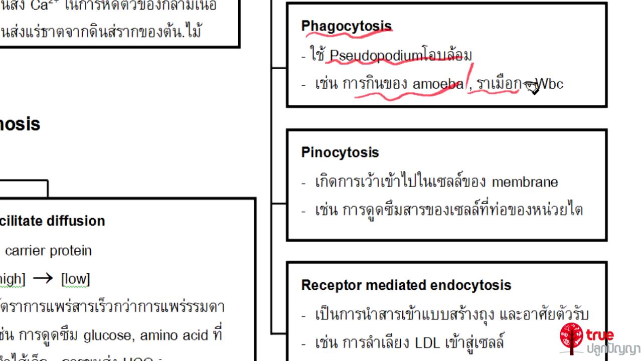 ชีววิทยา ม.4 เรื่อง เซลล์ ตอนที่ 8