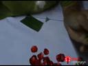 การทำดอกข่าจากกลีบกุหลาบ