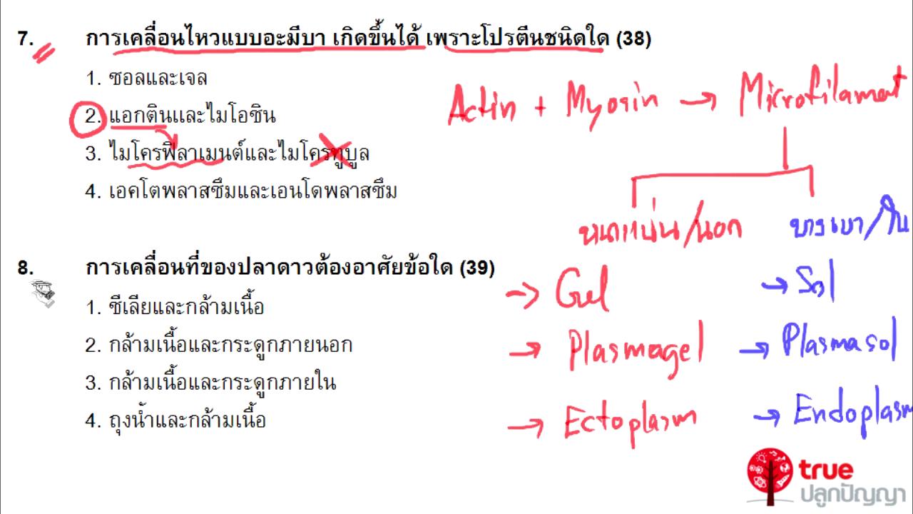 ชีววิทยา ม.4-6 เรื่อง การเคลื่อนไหวของโปรโตซัว สัตว์และคน ตอนที่ 3